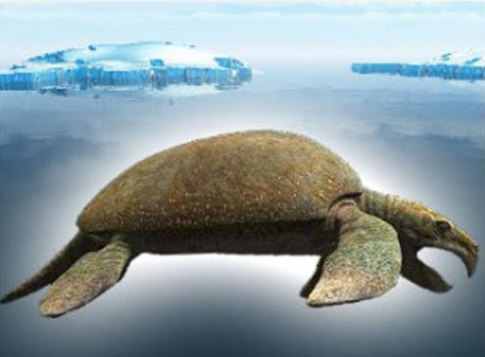 Архелон. Гигантская черепаха