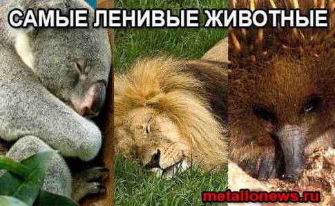 Самые ленивые животные в мире