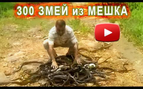 Его не кусают змеи (видео)