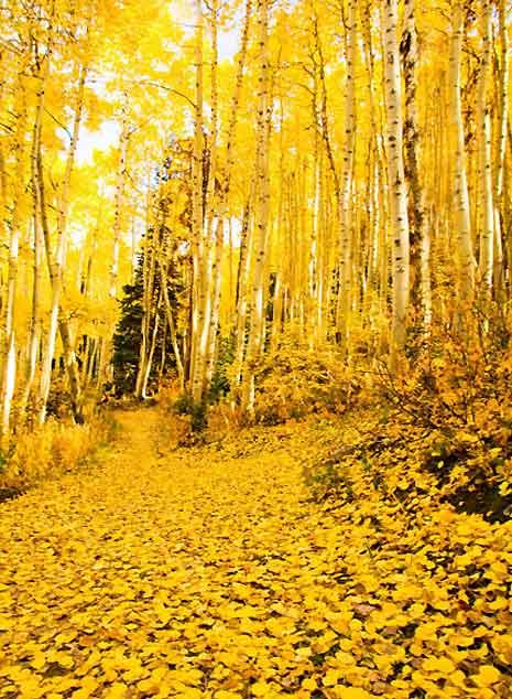 Осенние листья (фото)