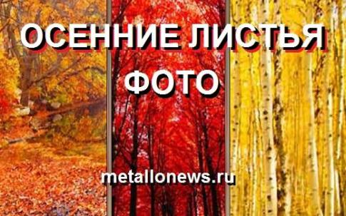 Осенние листья фото картинки